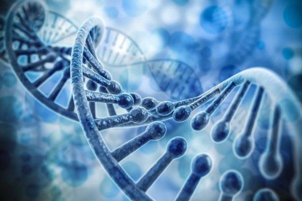 Ученые: Память об сердечном приступе сохраняется в генах