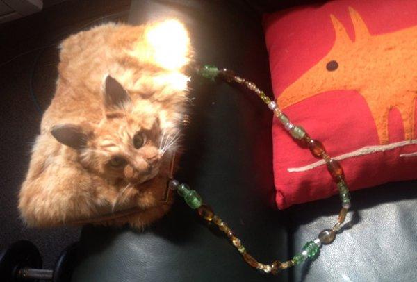 Таксидермист из Новой Зеландии сшила из кошки клатч