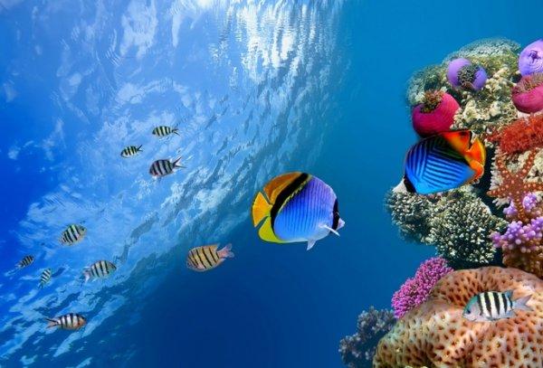 Коралловые рыбы испытывают стресс на удалении друг от друга – ученые