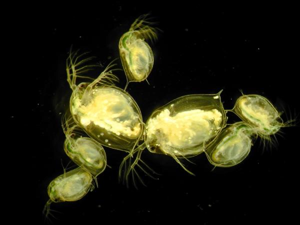 Ученые: Инвазивные виды могут снизить распространение заболеваний