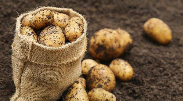 Диабетикам рекомендуют употреблять выращенный в Онтарио картофель