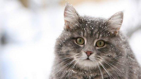 Ученые: Викинги брали в путешествия котов