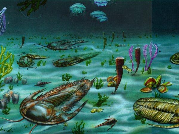 Количество кислорода повлияло на эволюцию многоклеточных