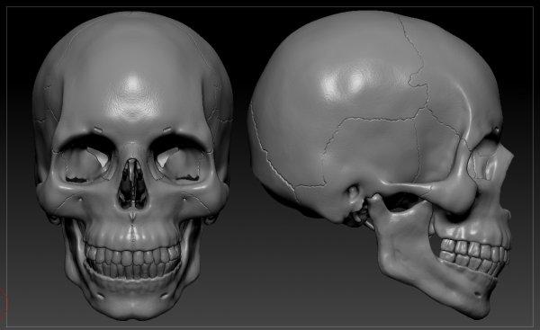 Ученые нашли в Баксанском ущелье странные черепа длинноголовых людей