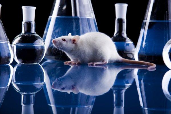 Ученые обнаружили уникальный белок, замедляющий болезнь Паркинсона