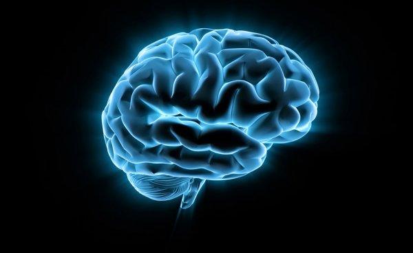 Ученые обнаружили участок мозга, перенимающий опыт других людей