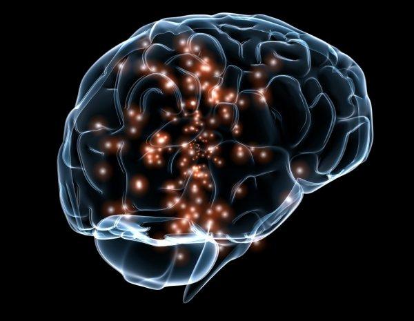 Ученые нашли новые гены, ответственные за величину мозга