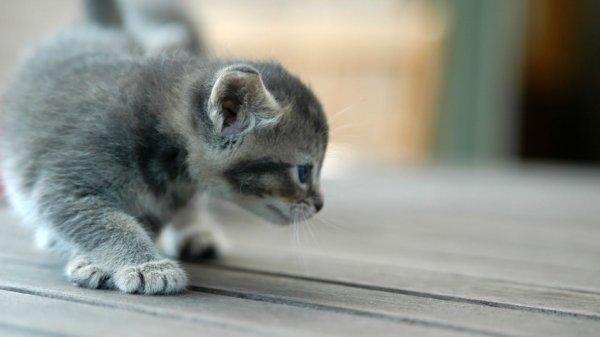 Ученые выяснили, почему маленькие животные нравятся людям