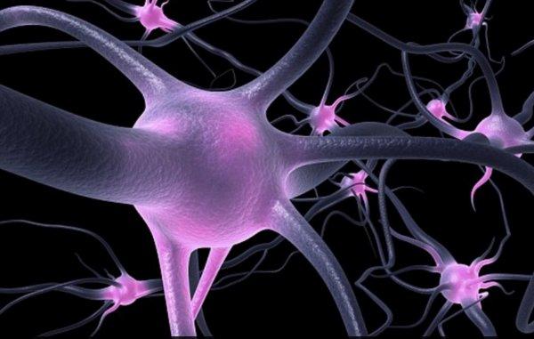 Ученые создадут «человеческий атлас» с подробным описанием всех клеток организма