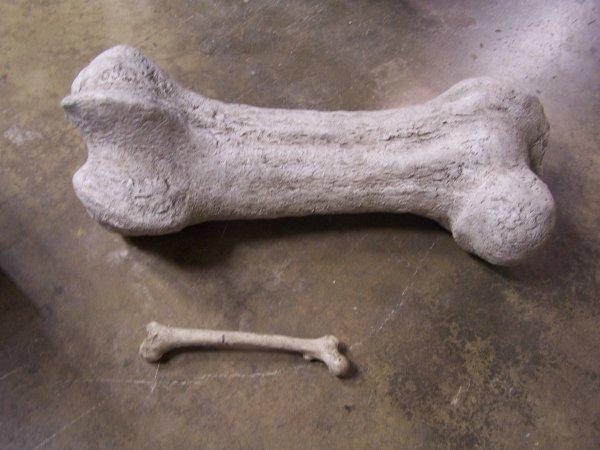 В США в Национальном парке Денали нашли первые кости динозавров