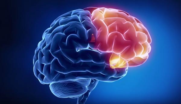 """Ученые: Мозг раскладывает плохие и хорошие эмоции """"по полочкам"""""""