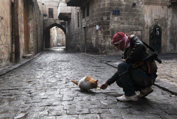 Террористы «Джабхат ан-Нусры» начали обстрел гуманитарных коридоров Алеппо