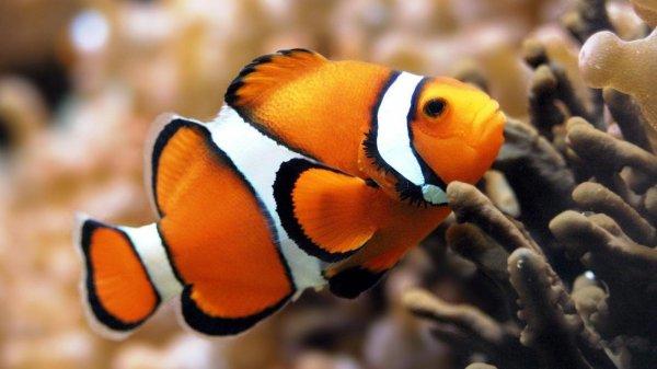 Ученые: Изменение климата притупляет инстинкт выживания у рыб