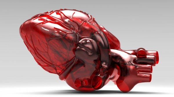 Ученые создали сердце со встроенными датчиками