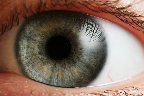 Ученые из США смогут восстанавливать зрение слепым людям