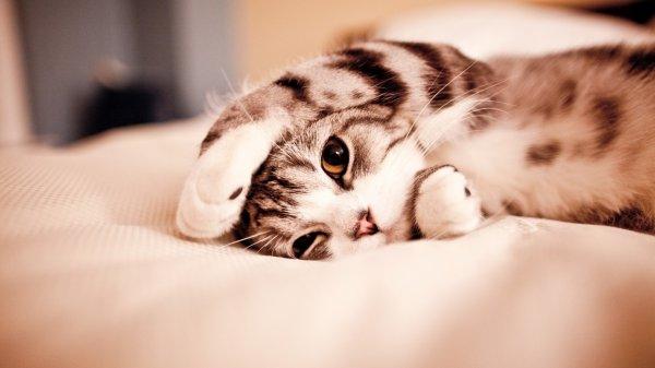 Интернет-магазин Alibaba разыскивает кота-менеджера для продажи «милоты»