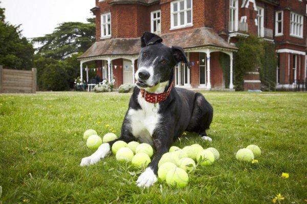 «Самый одинокий пес Великобритании» обрел новый дом