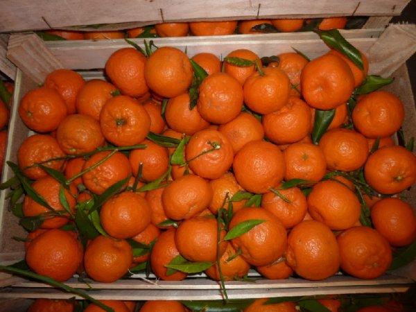 В России стоимость апельсинов стала падать после снятия запрета на ввоз цитрусовых из Турции