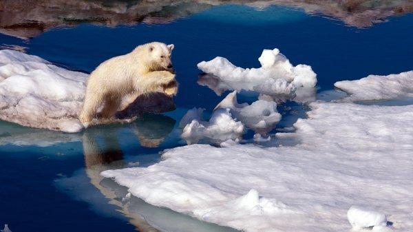 В Арктике таинственный гул со дна океана распугал животных и рыб