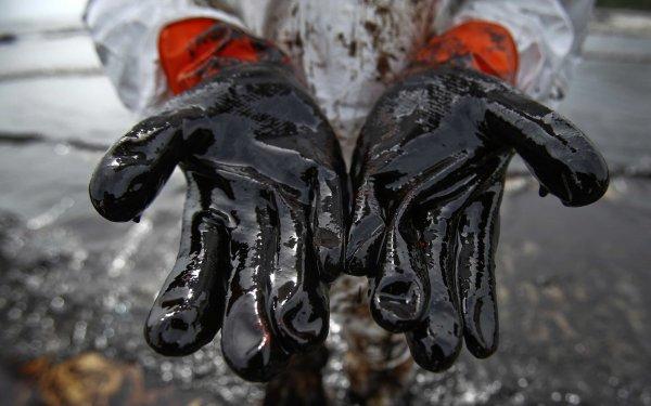 Учёные: Топливо будущего состоит из экскрементов