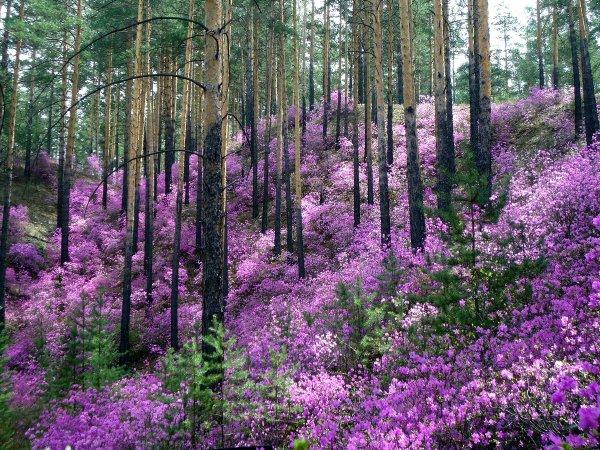 Ученые из Якутии пополнят Красную книгу 320 видами растений