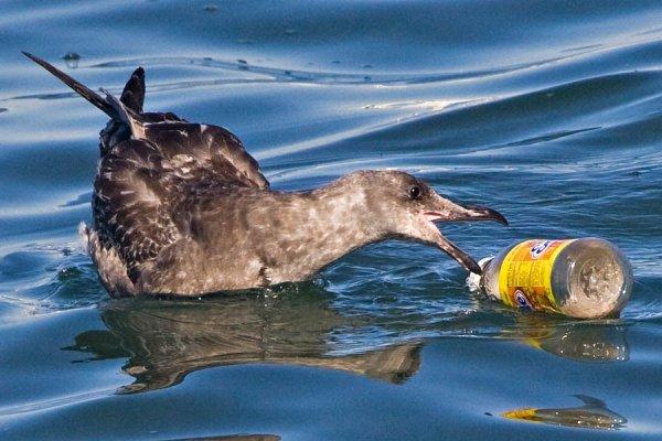 Ученые рассказали, почему птицы питаются пластиком