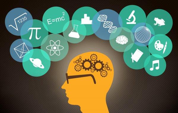 Ученые сравнили работу «сети памяти» с поисковой системой Google