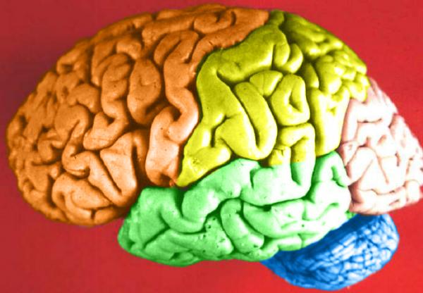 Ученые обнаружили вещество, помогающее улучшить память