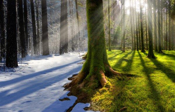 Изменение климата на Планете угрожает жизни животным и растениям