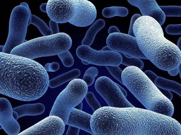 Ученые обнаружили ранее неизученный организм