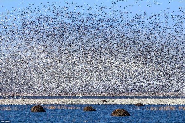 Ученые обнаружили способность птиц снижать температуру воздуха