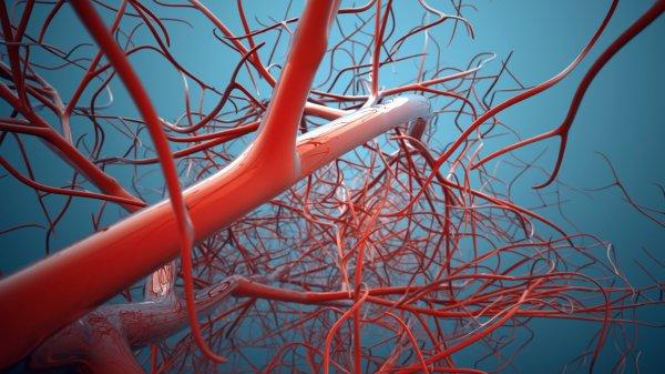 Ученые из США научились выращивать кровеносные сосуды в лаборатории