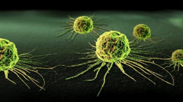 Ученые: Человеческие клетки способны уничтожать рак
