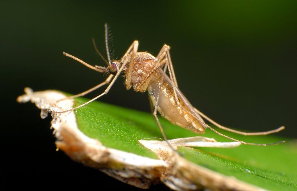 средство для вывода паразитов из организма