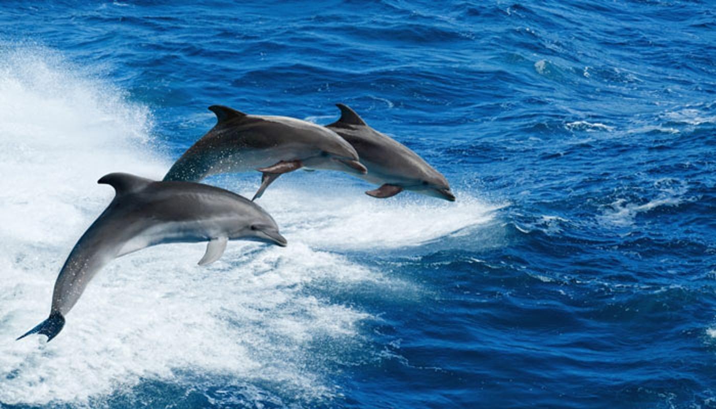Ученые о сексе дельфинов