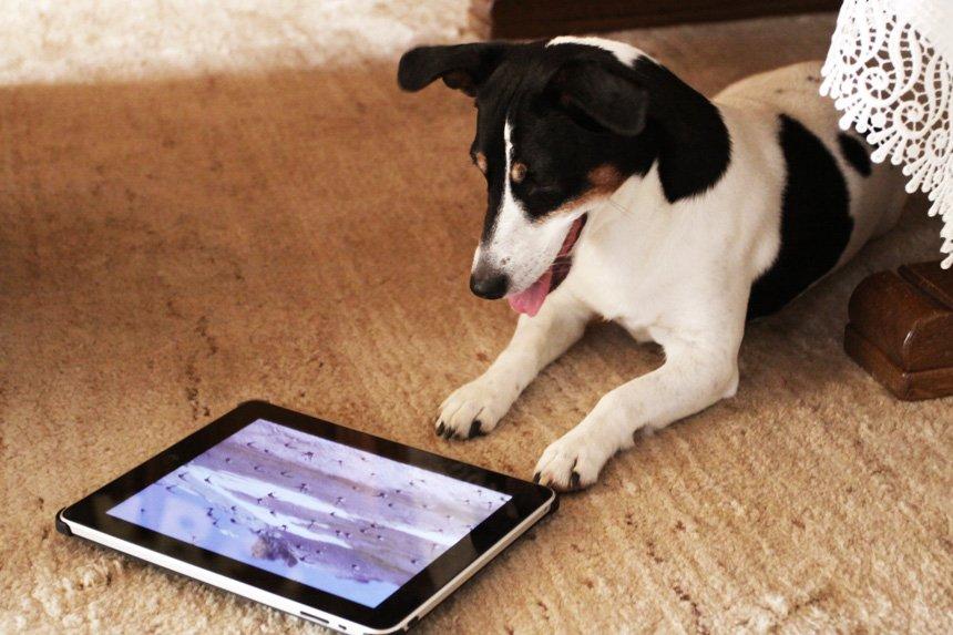 Нравятся ли собакам музыка, кино и живопись?