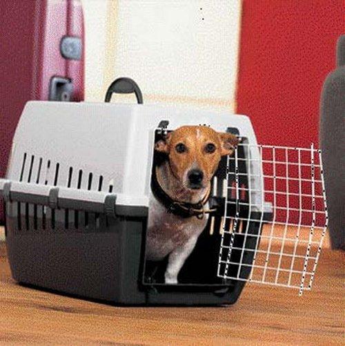 Со следующего года БЖД упрощает правила перевозки домашних животных