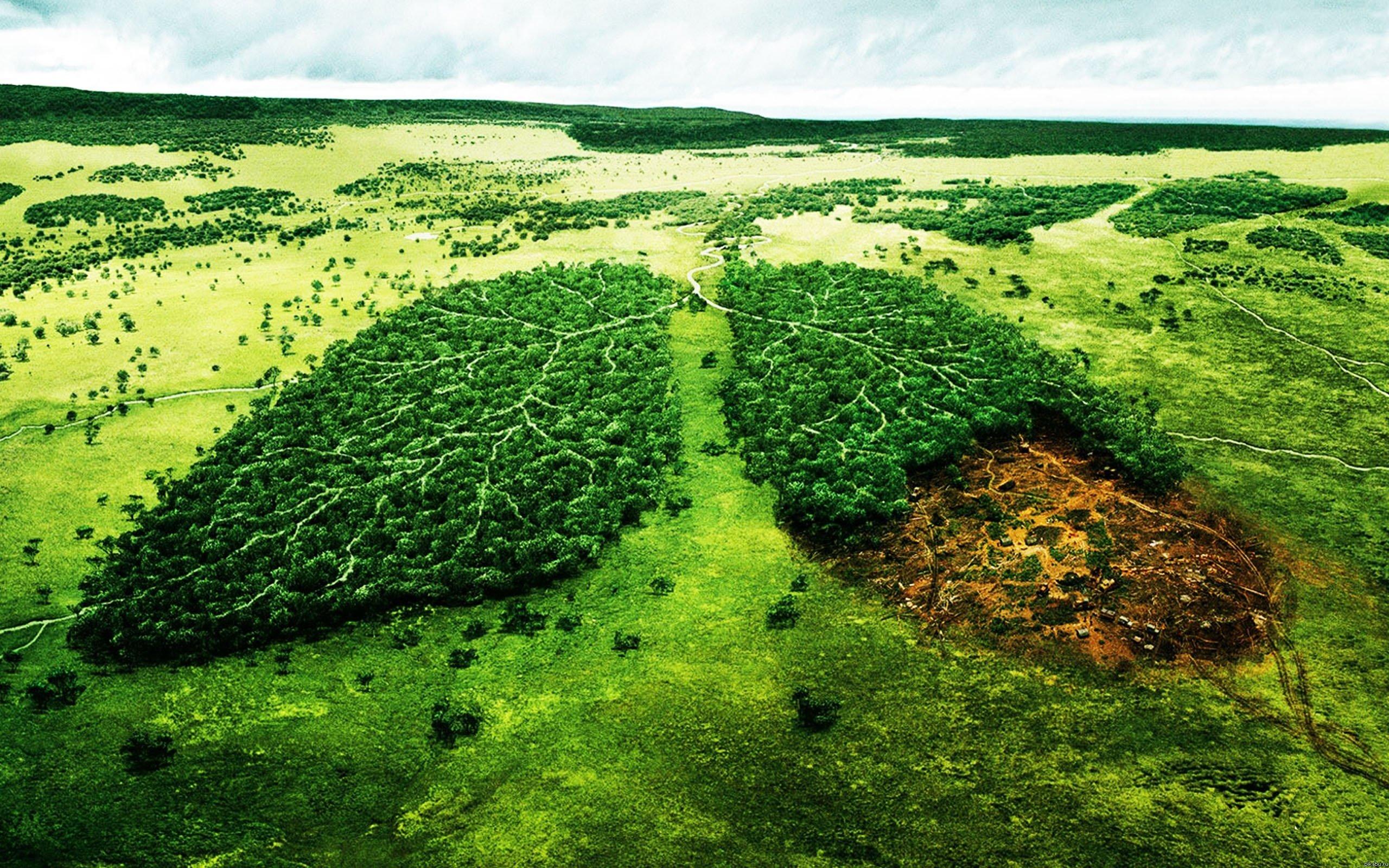Владикавказ окружит «Зеленый щит» на семь тысяч гектаров с запретом на вырубку деревьев