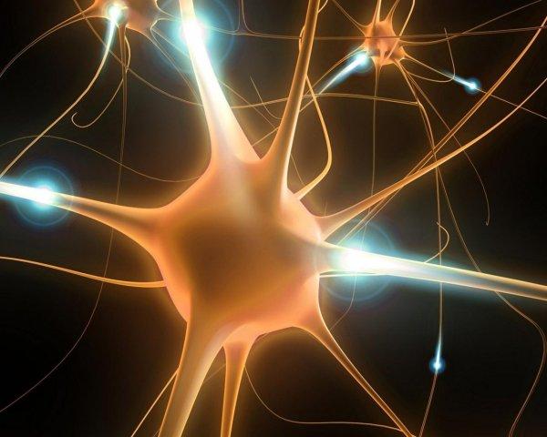 Нейроны в мозге человека имеют цикл сна-бодрствования - ученые
