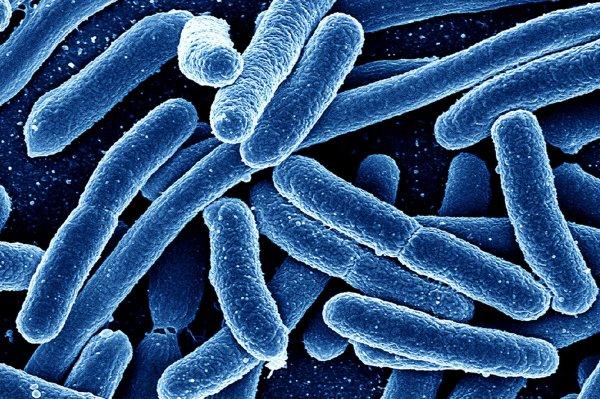 Ученые: Бактерии могут менять пол мокриц