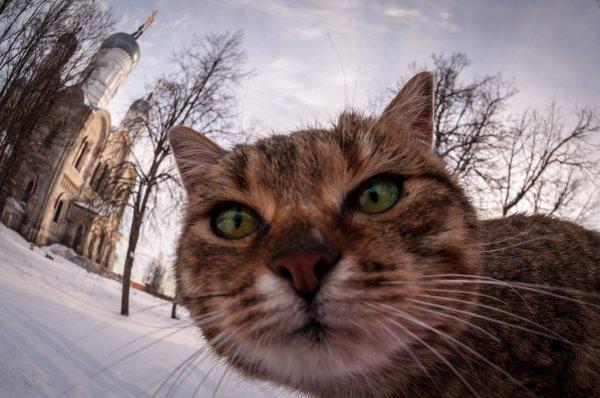 Два пермских кота попали в ТОП-10 самых знаменитых котов 2016 года