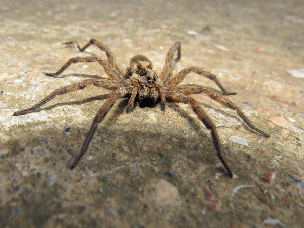 Алтайский ученый открыл новый вид паука