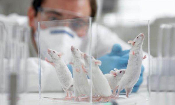 Ученые нашли способ омолодить организм и продлить жизнь