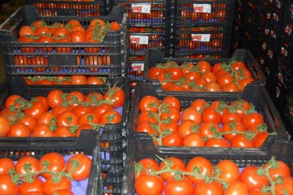 Под Ярославлем раздавили 1,7 тонны санкционных овощей и фруктов