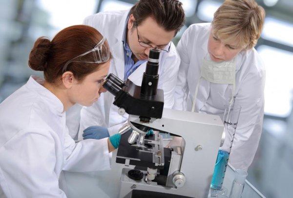 Ученые: Жировые клетки способствуют заживлению ран