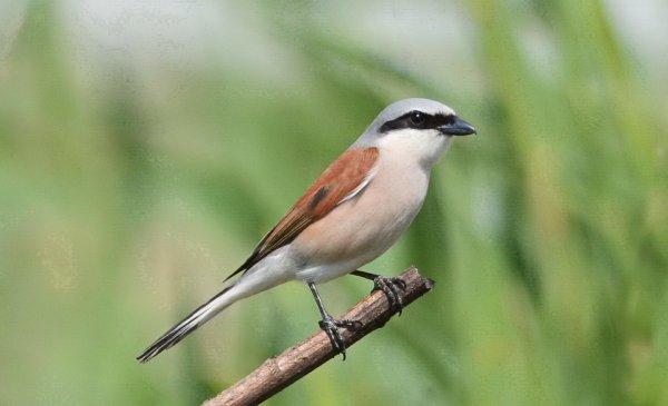 Ученые: Птицы мигрируют в поисках вечной весны