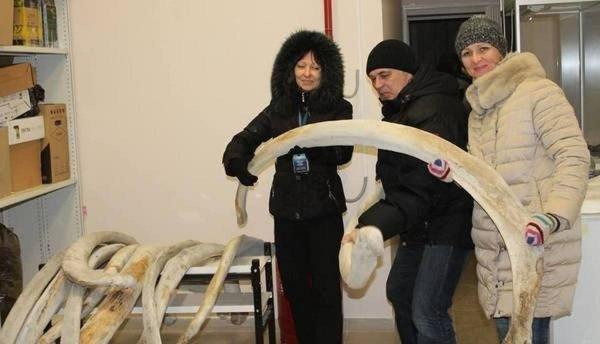 В Калининград с Чукотки привезли скелет огромного кита