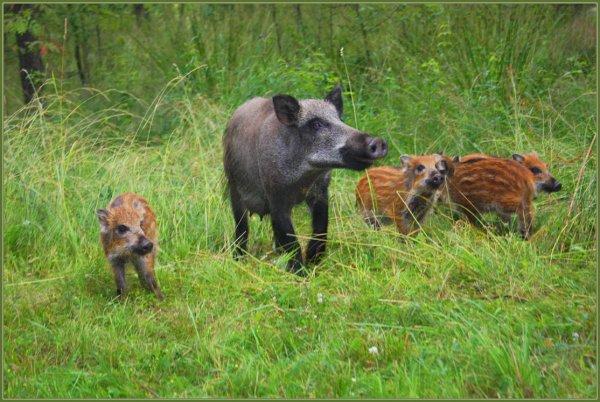 В Нижегородской области пересчитают диких животных