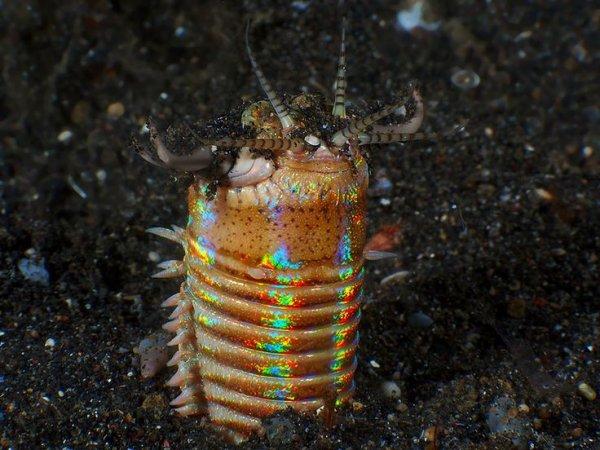 Учеными обнаружен трехметровый червь, поедающий морских обитателей