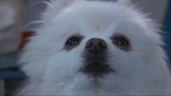 Ставший музыкальным мемом пес Гейб скончался